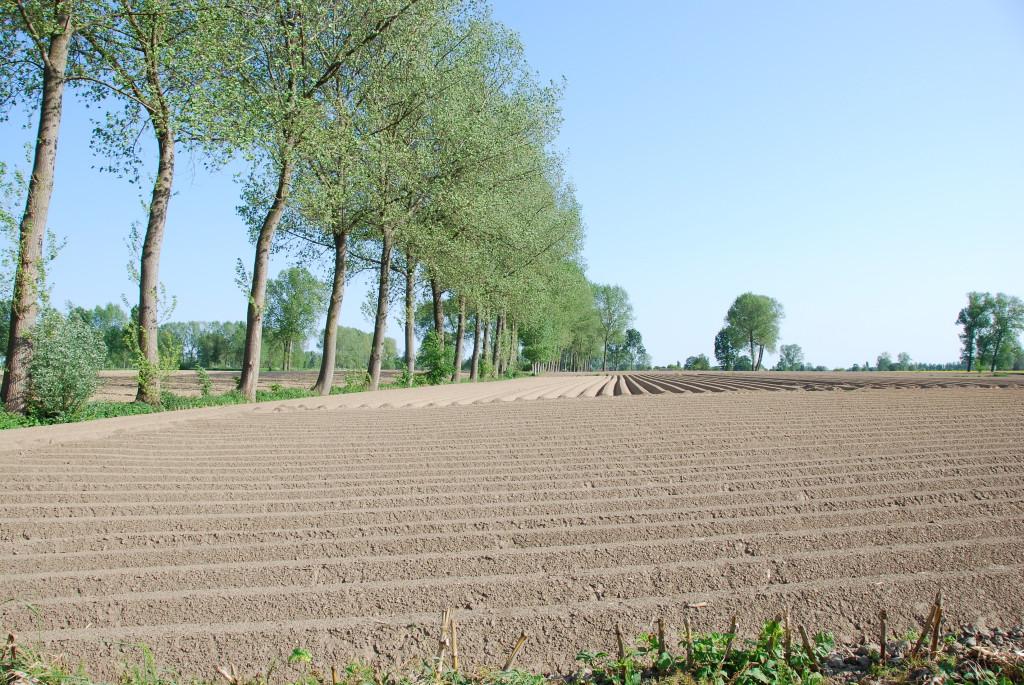 landschappen 2008 (17)