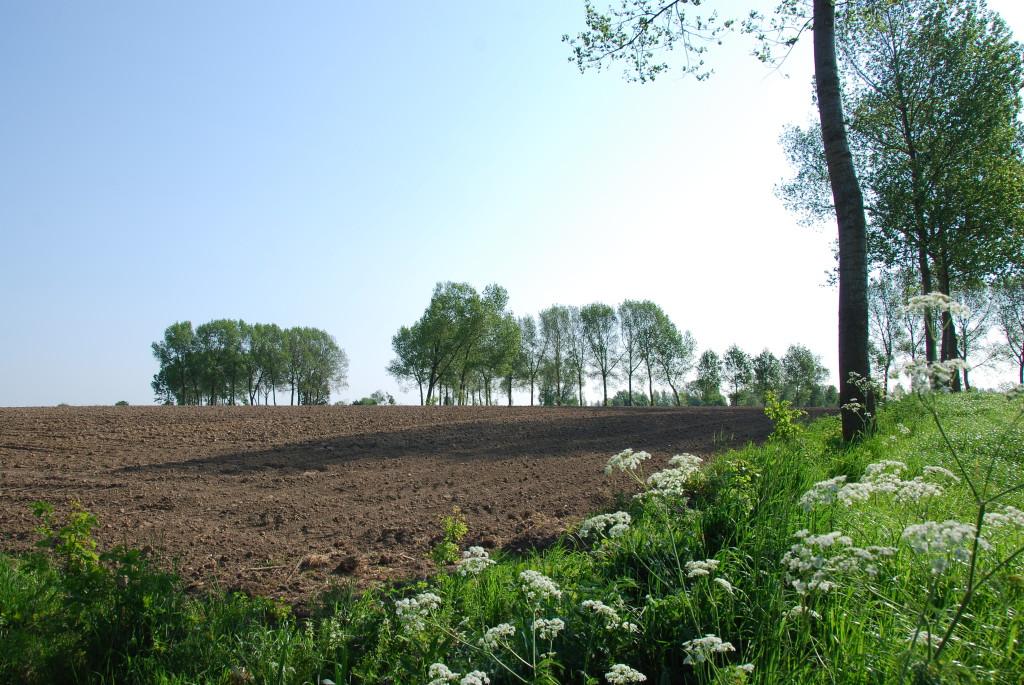 landschappen 2008 (19)