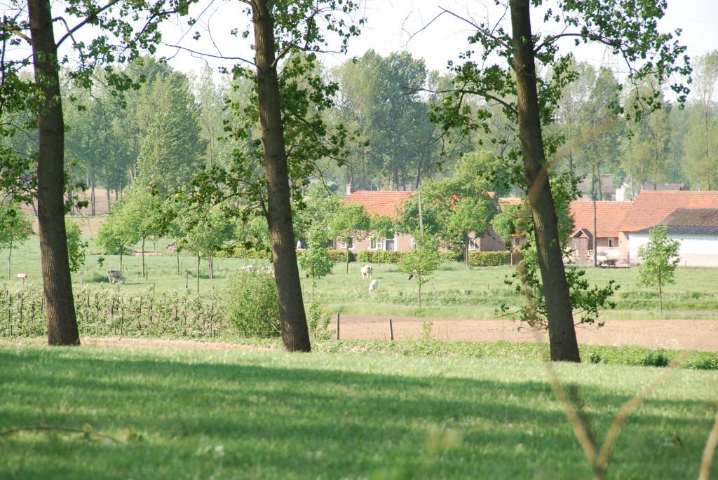 landschappen 2008 (21)