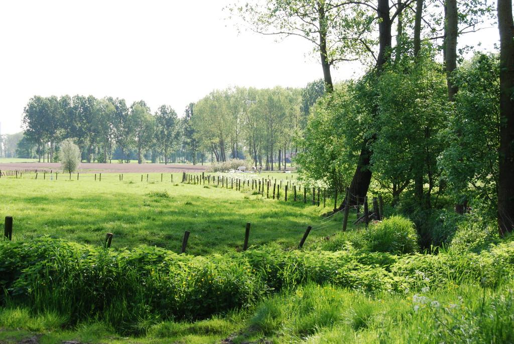 landschappen 2008 (22)