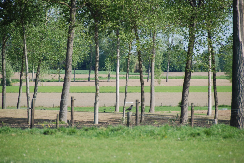 landschappen 2008 (23)