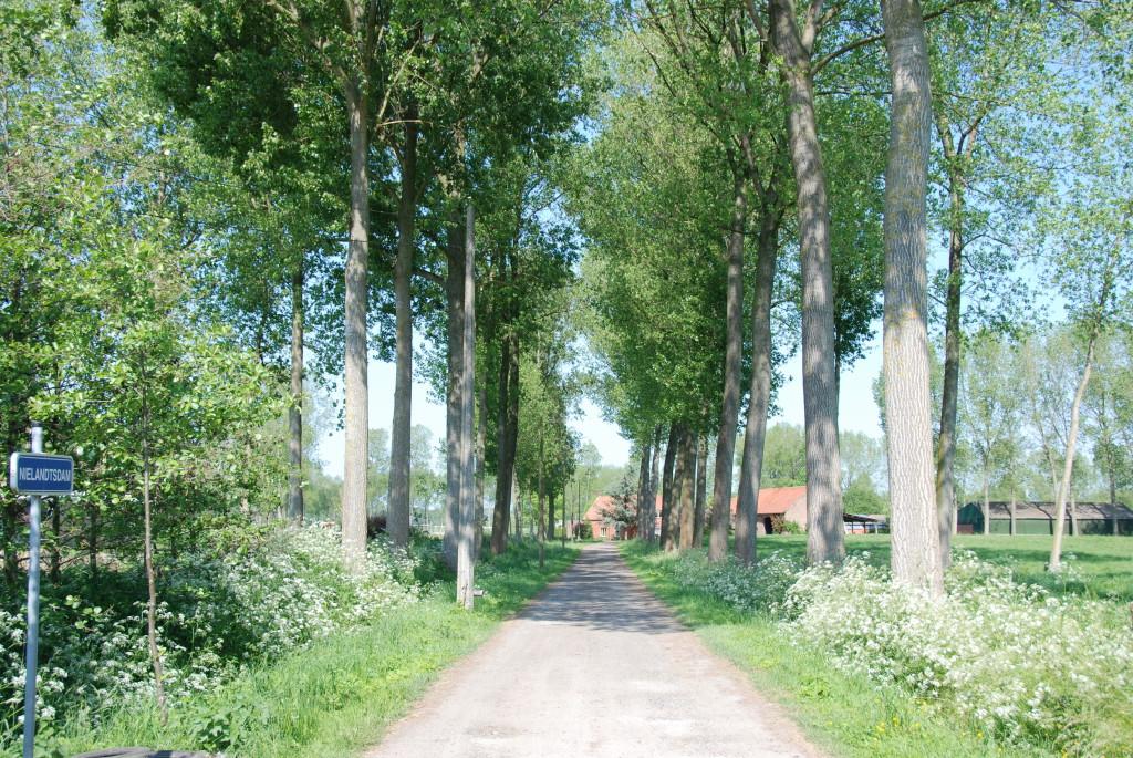 landschappen 2008 (28)