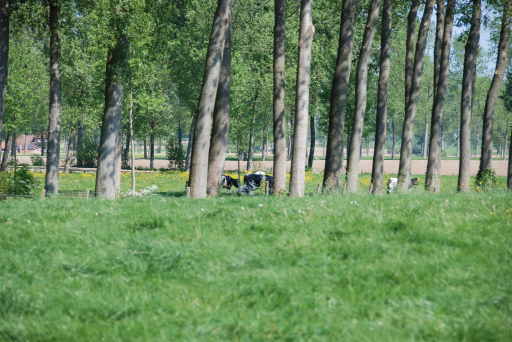 landschappen 2008 (31)