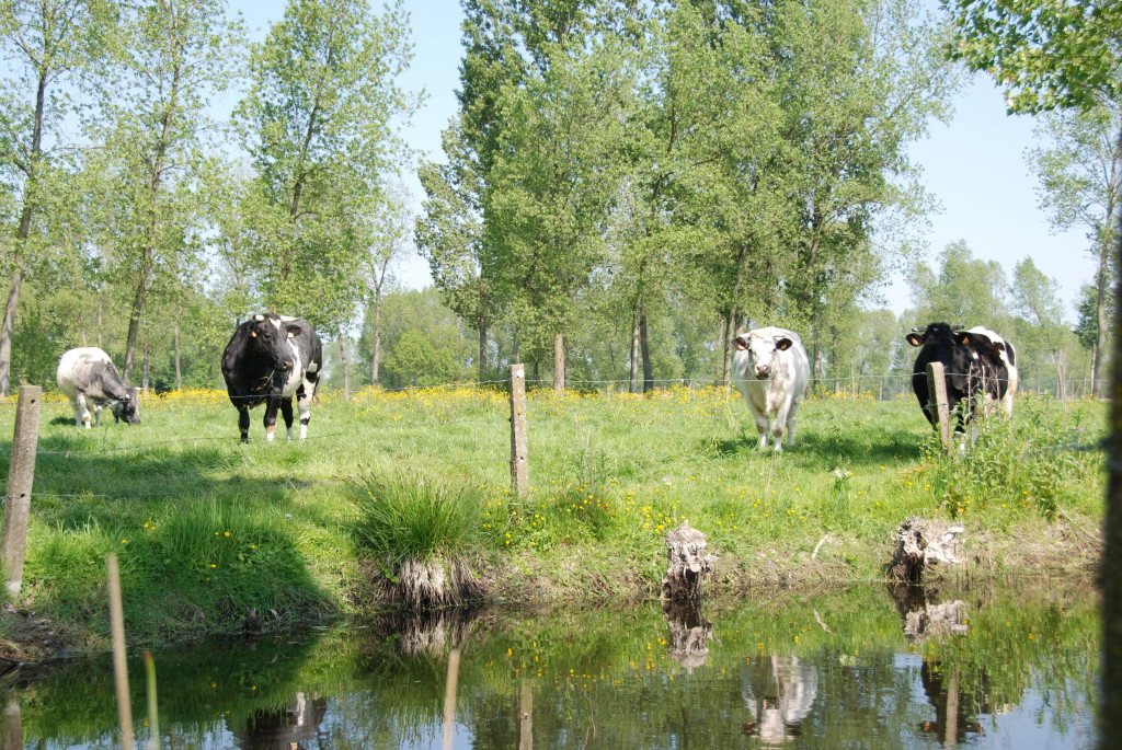 landschappen 2008 (34)