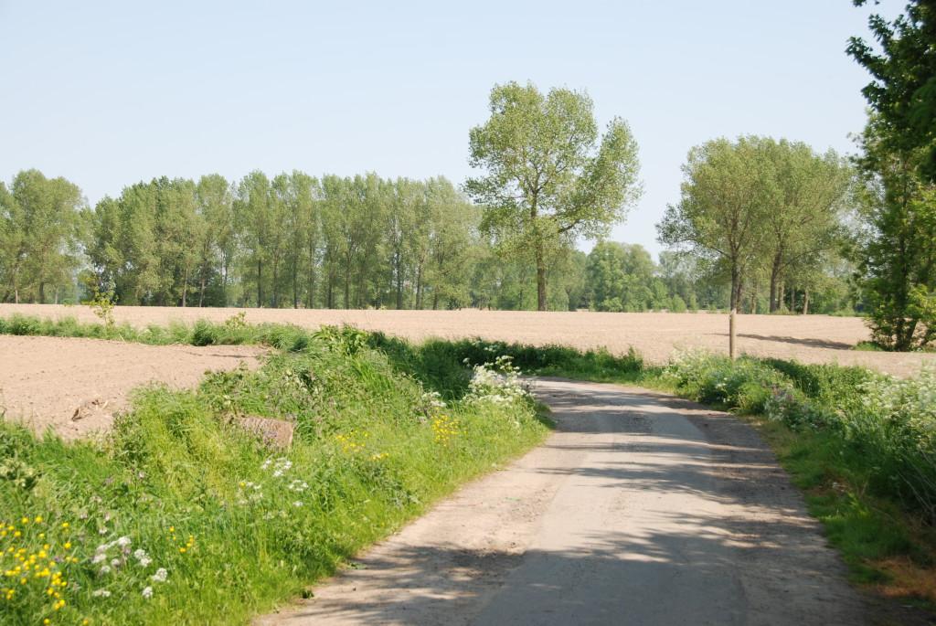 landschappen 2008 (36)