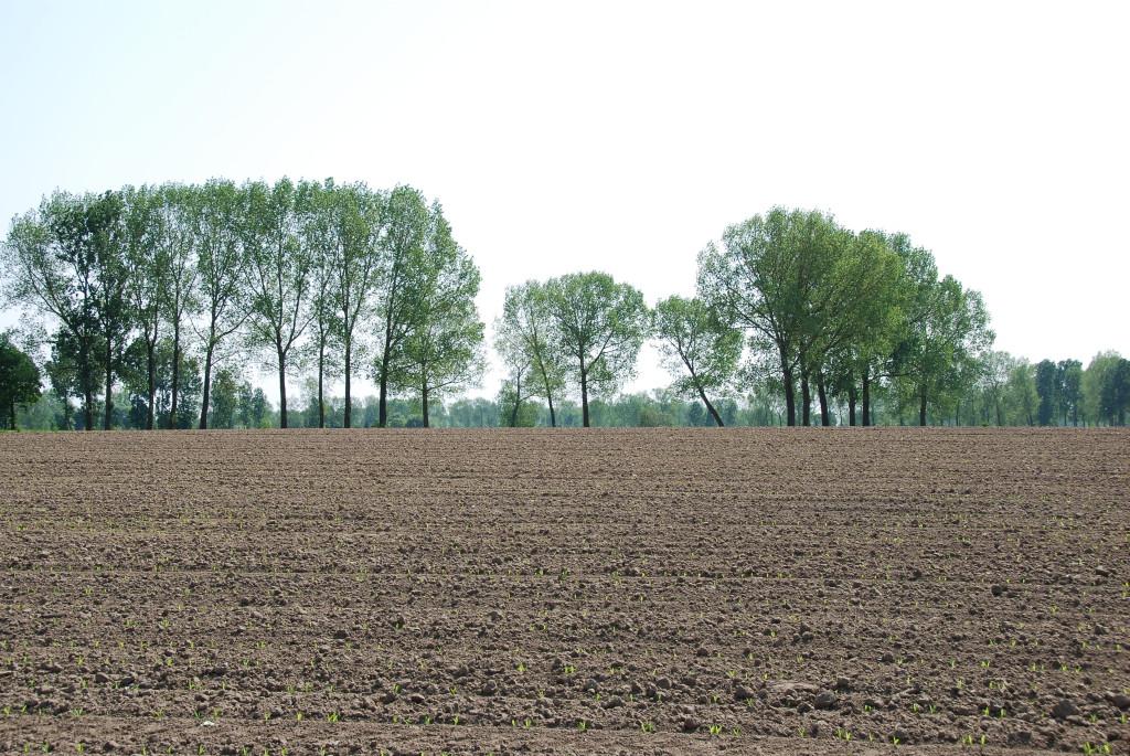 landschappen 2008 (37)