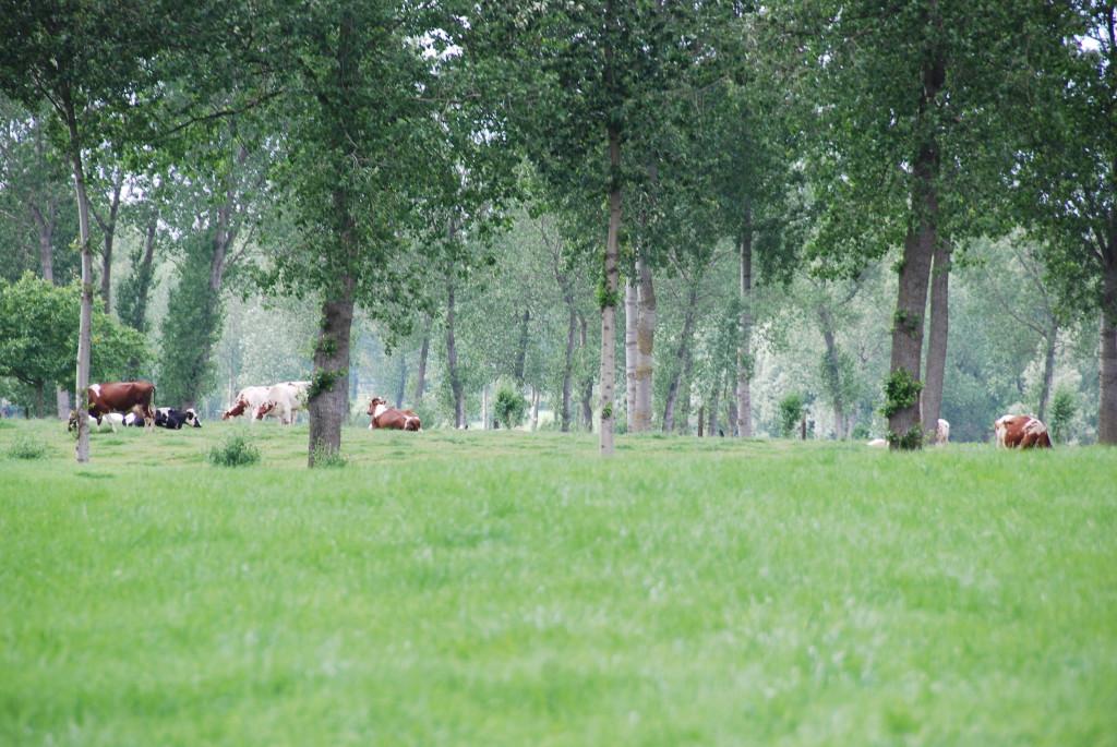 landschappen 2008 (40)