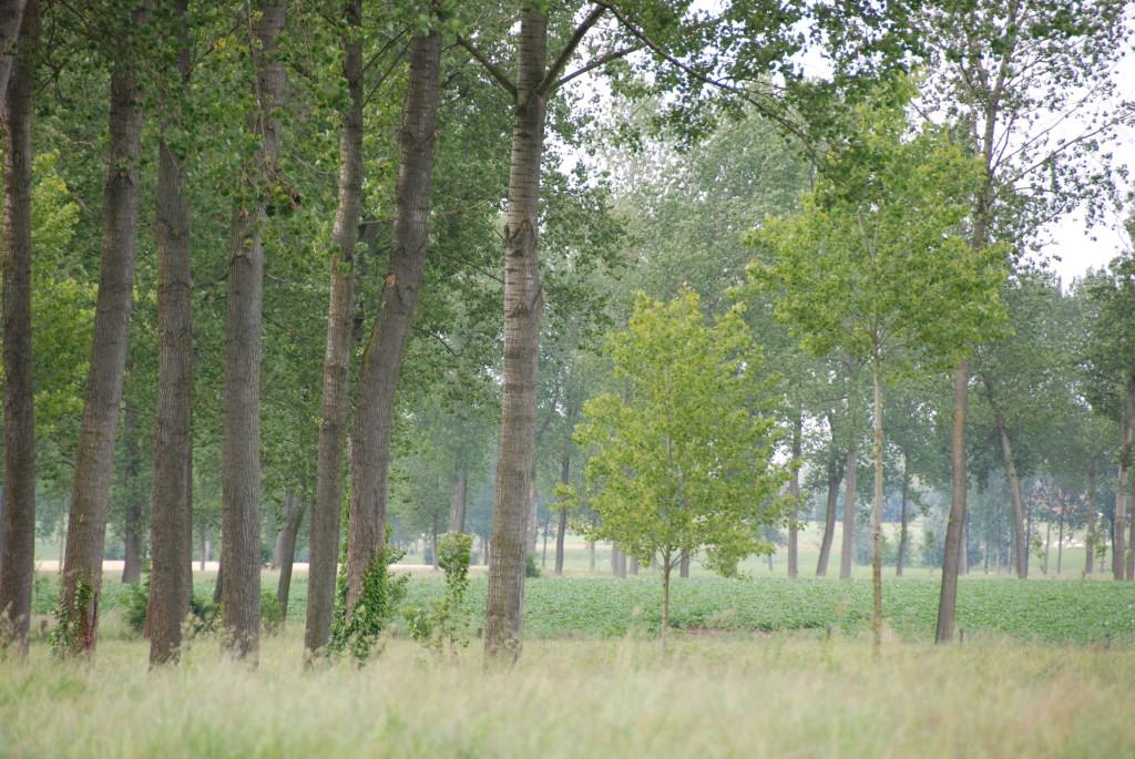 landschappen 2008 (41)