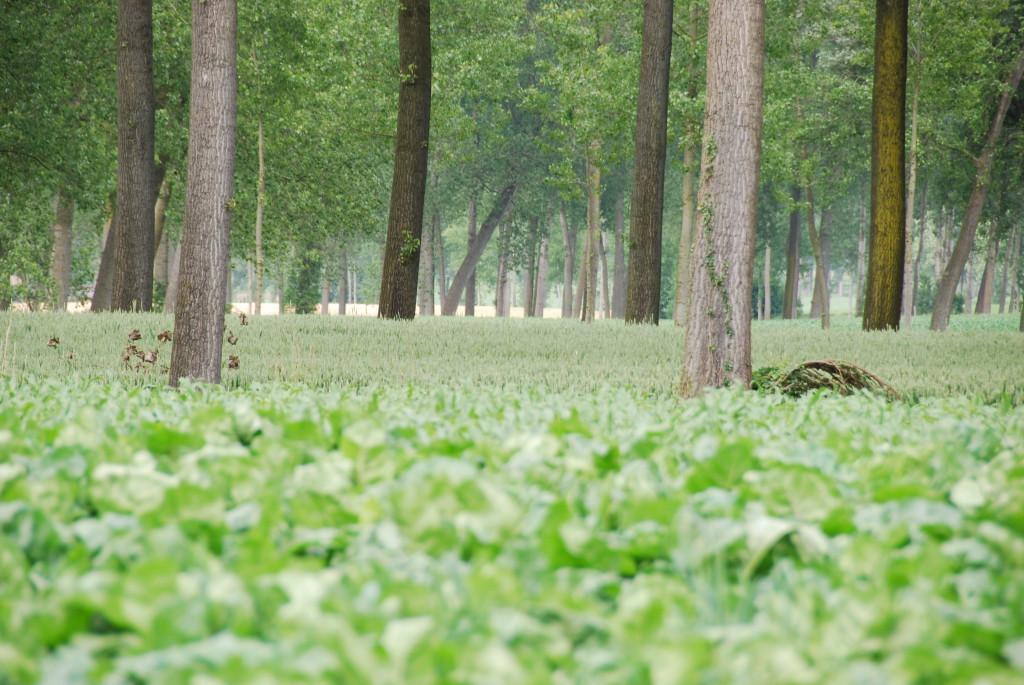 landschappen 2008 (43)