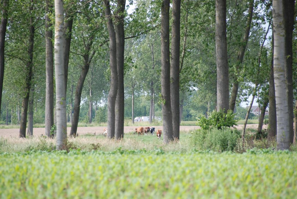 landschappen 2008 (47)