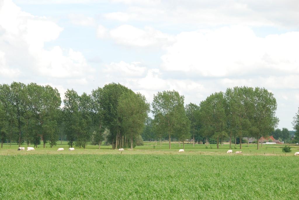 landschappen 2008 (51)