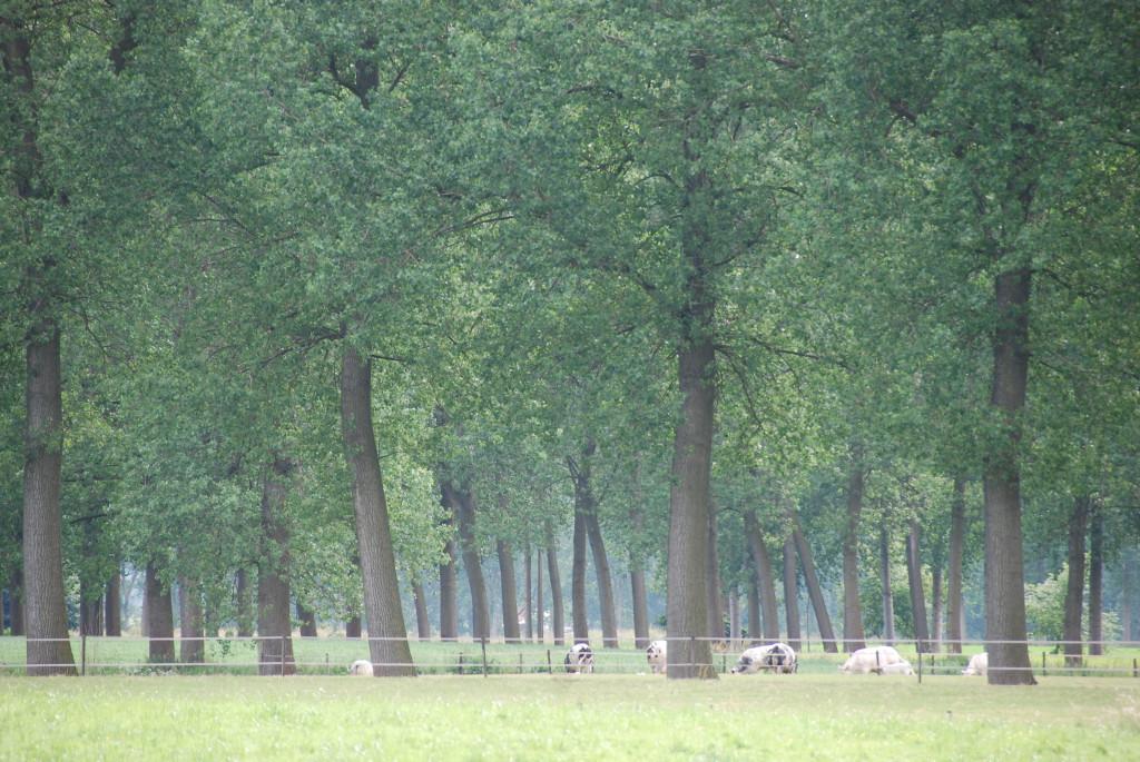 landschappen 2008 (53)