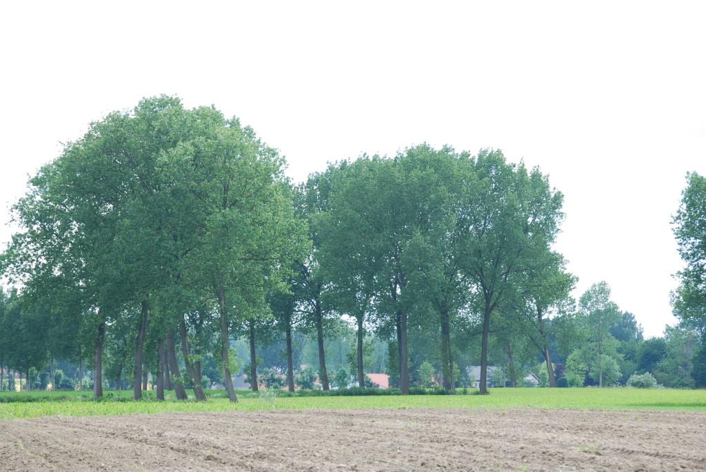 landschappen 2008 (54)