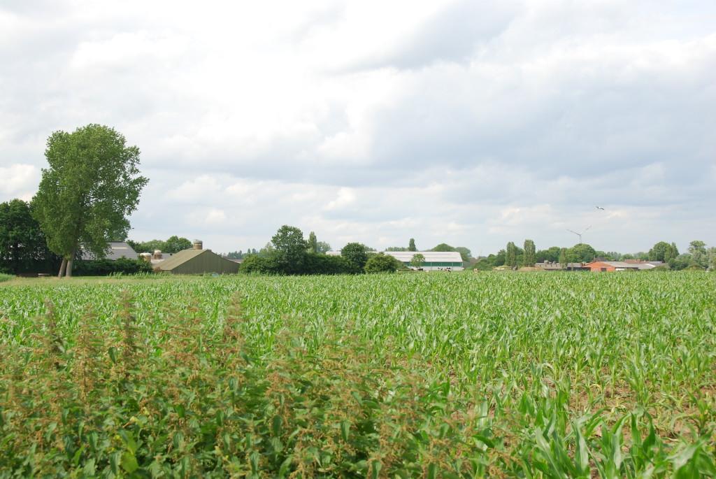 landschappen 2008 (55)