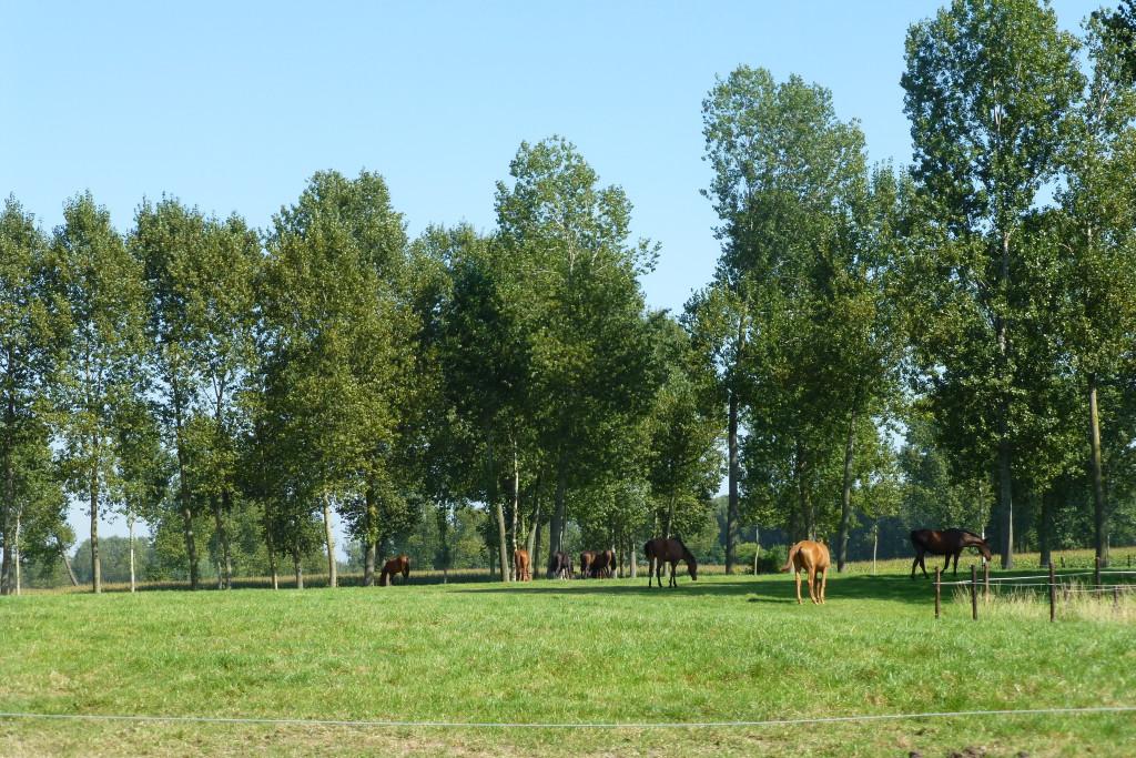 landschappen 2008 (75)