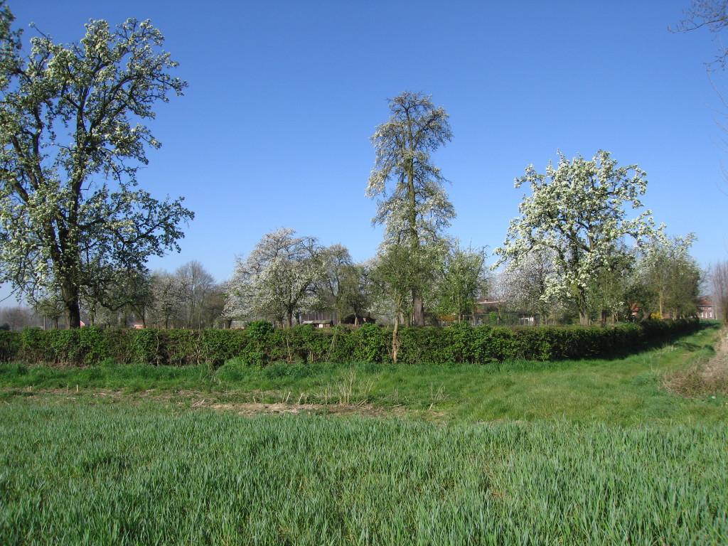 landschappen 2008 (9)
