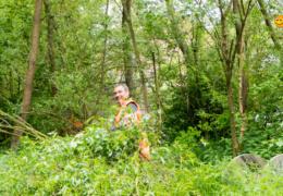 Op zoek naar Doornroosje in het Kikvorstbos?